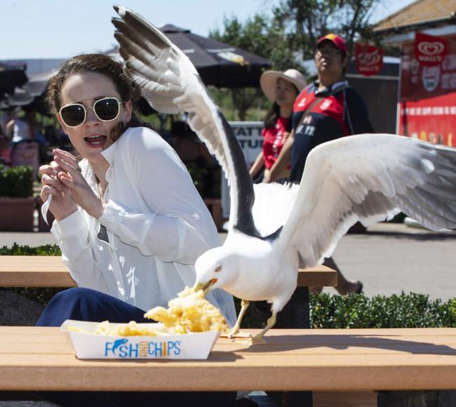 Чайки розжиріли на людських харчах та не можуть літати (фото)
