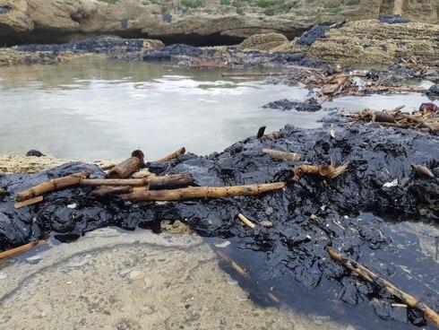 Екологічна катастрофа — 150 км морського узбережжя покриті нафтопродуктами та тілами тварин (відео, фото)