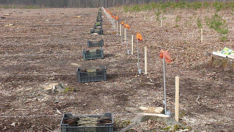 На Вінниччині висадять понад 800 гектарів лісу