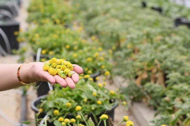Компанія вирощує їстівні квіти, як «б'ються» електричним струмом на язиці та в роті