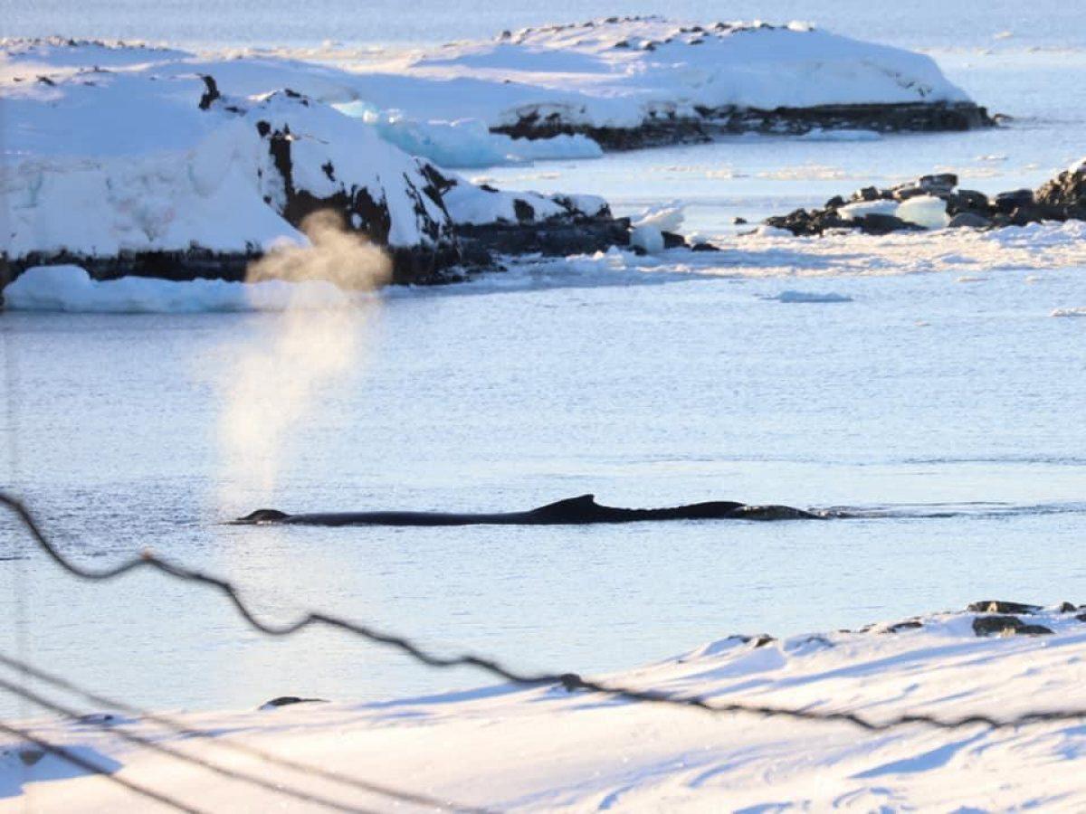 Біля полярної станції «Академік Вернадський» помітили рідкісних тварин (фото)