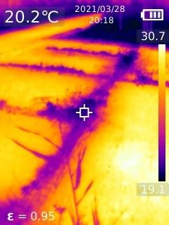 Від спеки рятують нескошені газони та парки: експеримент з тепловізором