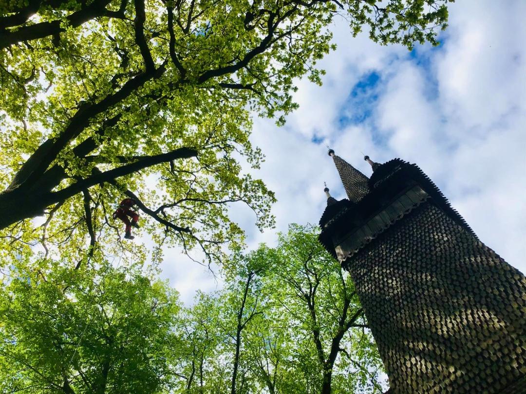 На Закарпатті полікували 600-річні вікові дуби (ФОТО)