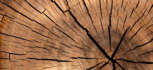 Во Львовской области черный лесоруб расстрелял полицейского и двоих лесников. Фото: pixabay