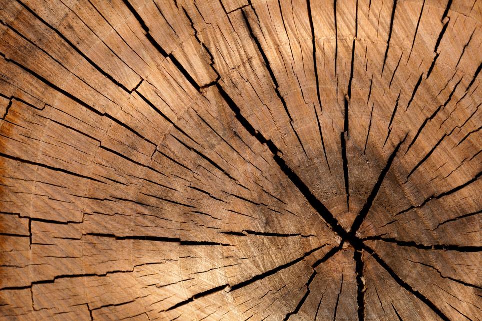 На Львівщині чорний лісоруб розстріляв поліцейського та двох лісників. Фото: pixabay
