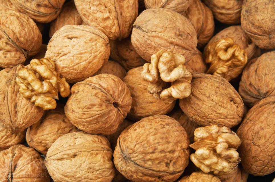 Селекціонери НААН вивели чотири нових скороплідних сорти волоського горіха