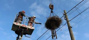 Щороку в Україні гине 26 видів птахів від зіткнення з лініями електропередач і ураження струмом, особливо страждає білий лелека