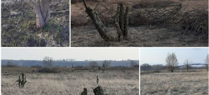 знищено близько 120 дерев груші звичайної, яблуні домашньої та верби ламкої на площі до 80 га невідомими особами в межах території Сеймського регіонального ландшафтного парку