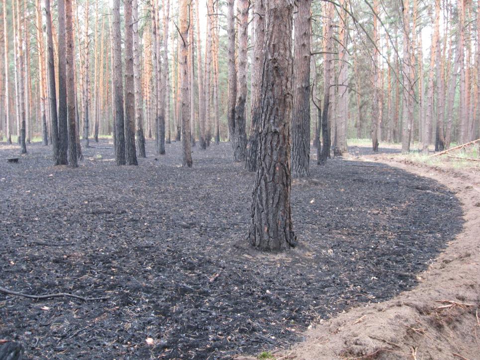 Оборювання осередку пожежі – ефективний спосіб зупинити горіння підстилки