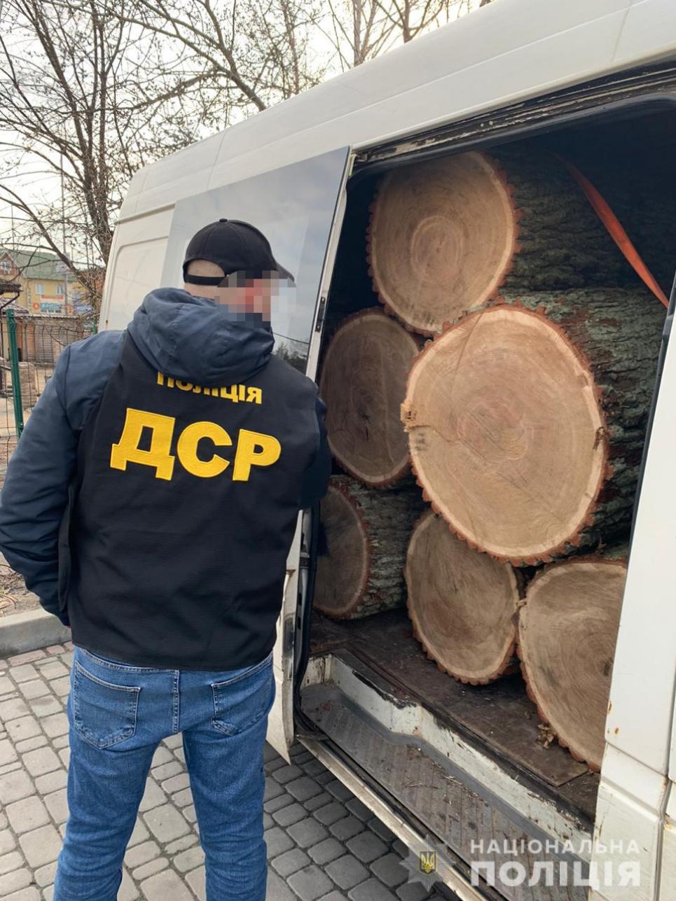Офіцер поліції оцінює обсяги деревини, які вкрали під час останньої рубки. Фото Національної поліції