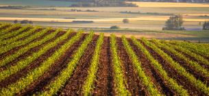 Уряд готується до ринку землі: затверджені правила перевірки власників земельних ділянок