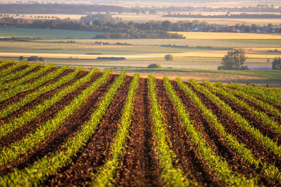 Правительство готовится к рынку земли: утверждены правила проверки владельцев земельных участков