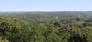 панорама парку. Фото Голосіївського НПП