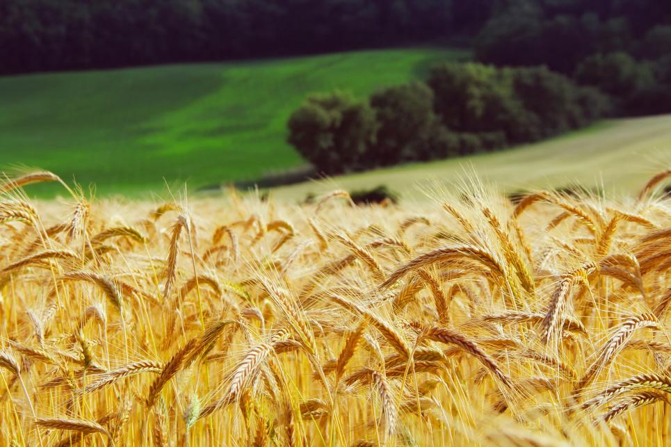 Зміна клімату зменшила врожайність агрокультур на 21 %. Фото:Pixabay