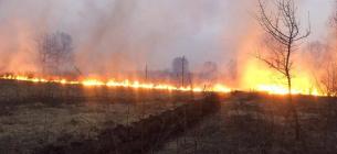 пожежа у Ніжинському держлісгоспі через підпал трави. на сьогодні погашена. Фото працівників лісгоспу