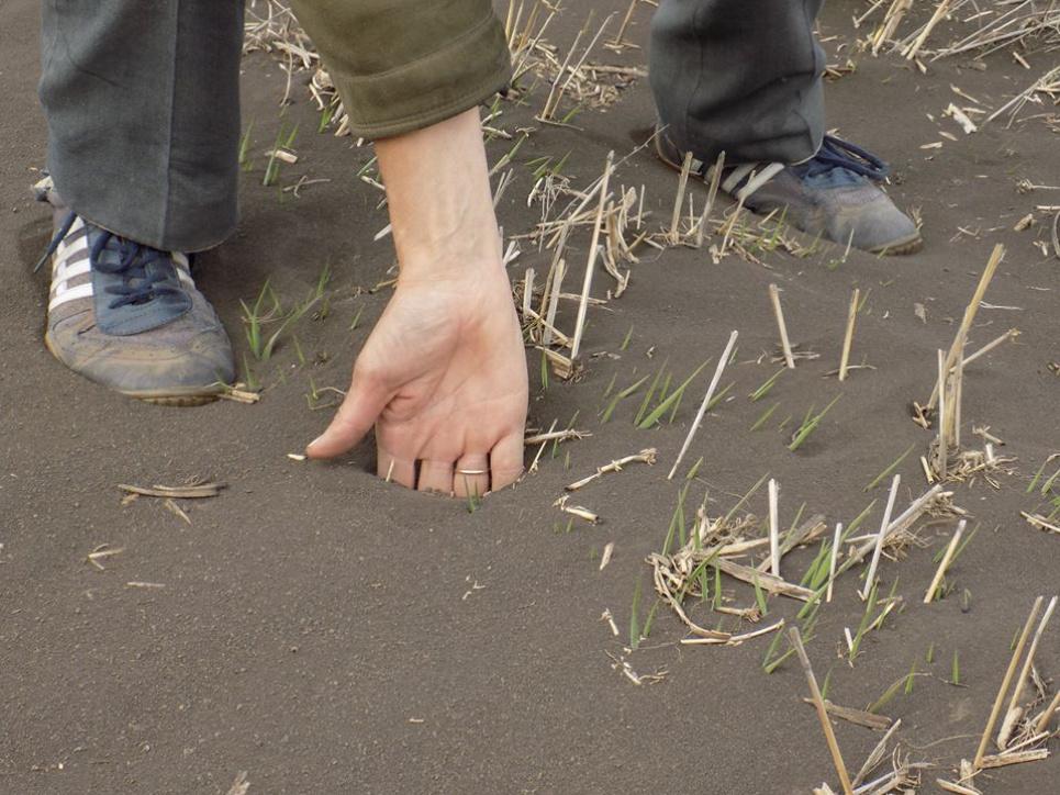 Стільки ґрунту намело з поля за перші 3-4 дні пилової бурі. Фото Олексія Бурковського