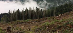 Міндовкілля збирається провести масштабну інвентаризацію лісів