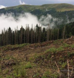 Минэкологии собирается провести масштабную инвентаризацию лесов