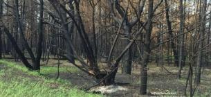 Фото Чорнобильського радіаційно-екологічного біосферного заповідника