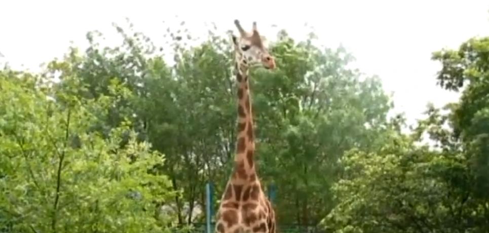 Скріншот відео Миколаївського зоопарку