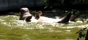 Фото Миколаївський зоопарк