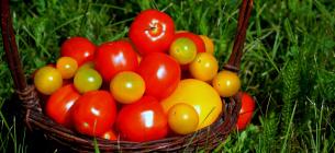 Вчені: вживання помідорів знижує ризик інсульту на 55%