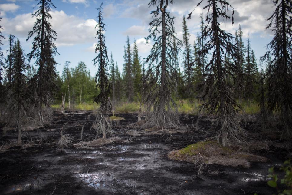 Фото з сайту Greenpeace-Росія