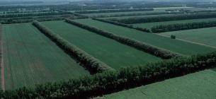 """Лісосмуги """"здорової людини"""", Північна Дакота. Суспільне надбання (Public Domain), https://commons.wikimedia.org/w/index.php?curid=687440"""