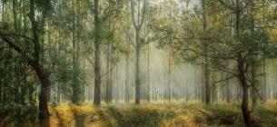 Кабмін виділив 20 млн грн на інвентаризацію лісів