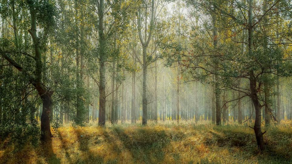 Кабмин выделил 20 млн грн на инвентаризацию лесов