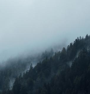 Головна функція лісів - екологічна. Фото pixabay