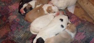 Фото yoltay-allan.jimdofree.com