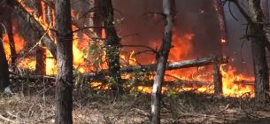Горить ліс на Луганщині. Стоп-кадр з відео ДСНС