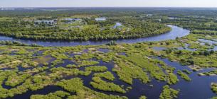 Прип'ять - унікальна дика річка. Фото з сайту https://savepolesia.org/(© Daniel Rosengren / FZS)