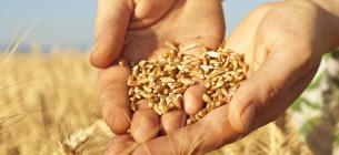 В Украине увеличиваются площади рискованного земледелия