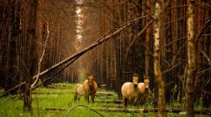 Все фото Denis Vishnevskiy