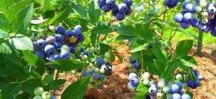 Фото - Stynava organic garden