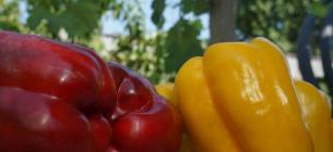 Фото з Facebook-сторінки Українського проекту бізнес-розвитку плодоовочівництва
