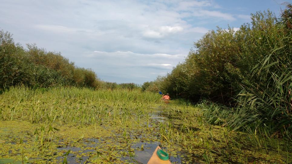 Фото русла р. Прип'ять після Вижівського водозабору. Це наслідок того, що воду забирають у Дніпро-Бузький канал. Фото Георгія Веремійчика