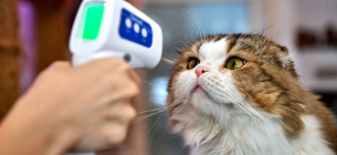 Фото - ЛИЛИАН СУВАНРУМФА / AFP/ GETTY IMAGES