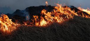 На Житомирщині подружжя пенсіонерів ледь не згоріли живцем: палили сухостій. Pixabay