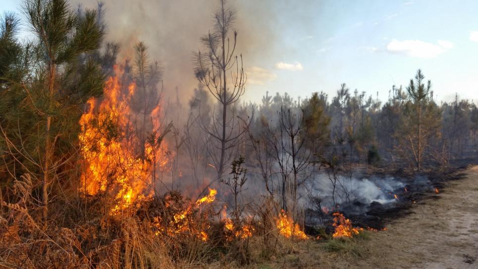 У минулому році пожежі знищили 75 тис га лісу — голова Держлісагентства