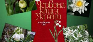 """Слайд із презентації """"Рослини Червоної книги"""" учениці 5-В класу Дарини Проскури"""