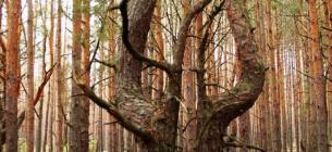 Фото ілюстративне зі сторінки Чорнобильського радіаційно-екологічного біосферного заповідника