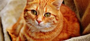 Кішки або собаки: фахівці підрахували, кого більше люблять в різних країнах світу