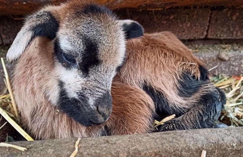 Фото: Фейсбук Одеського зоопарку