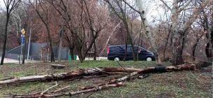 Сильний вітер повалив у Києві кілька десятків дерев