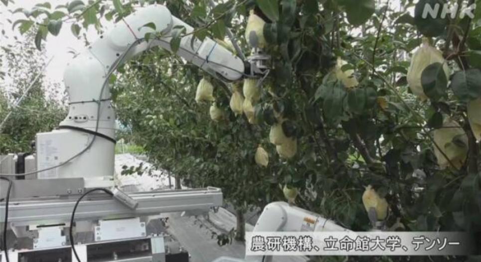 На збір одного фрукта машина витрачає близько 11 секунд