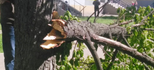У ВРУ зареєстрували законопроєкт, який передбачає карну відповідальність за знищення дерев і чагарників