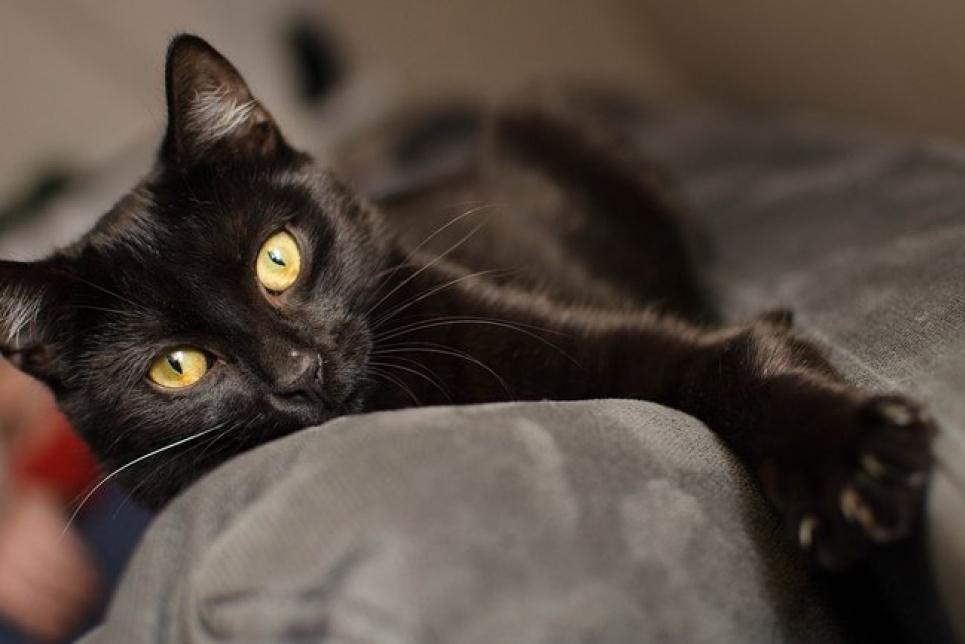 В Киеве от смерти в огне спасли черного кота